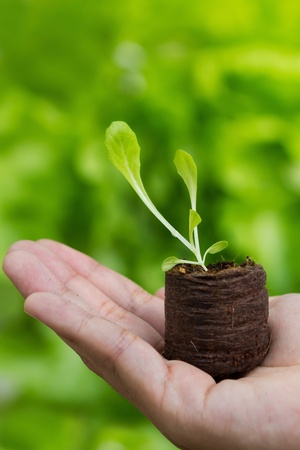 plant in hand on green nature background