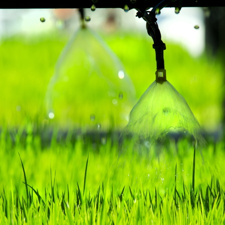 Pouring young plants from small Sprinkler spraying Stock Photo