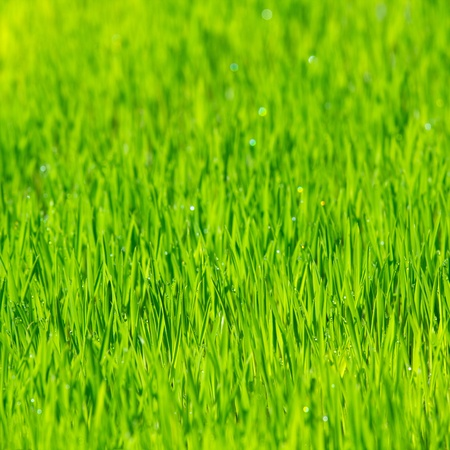 greenness: Green grass nature background Stock Photo