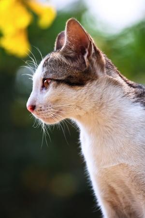 Portrait de chat dans la nature de fond Banque d'images