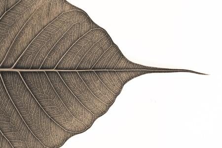 vida natural: cerca de la hoja en blanco y negro