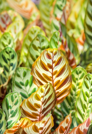 Colorful Leaves Background Stock Photo