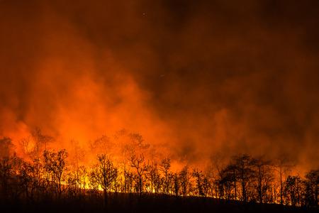 夜、赤い花の丘に野火のラインはすべてを破壊します。