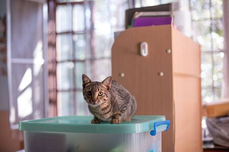 Cute tabby cat in storage room, Kitten sitting in house in the morning.