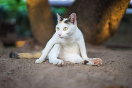 Funny cat sitting on the ground taken from low angle view 스톡 콘텐츠