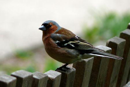 Bird on a fence. Stock Photo