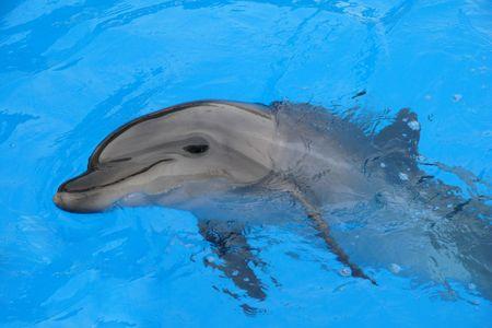 Dolphin Afolina Stock Photo