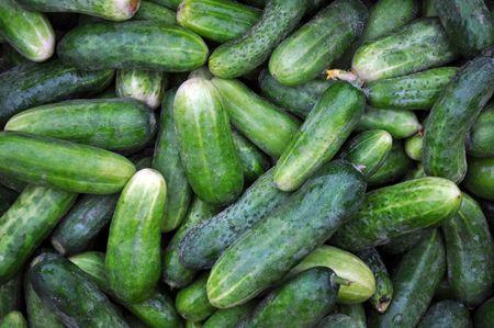many crisp ripe cucumbers
