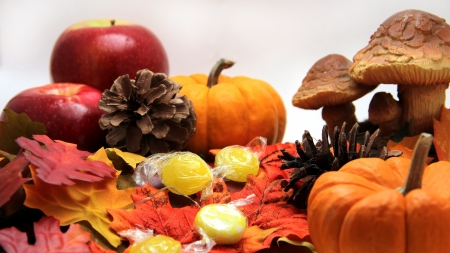 Thanksgiving fall still life photo