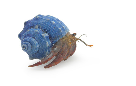 A hermit crab isolated on white side view Stock Photo