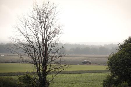 early fog: A vast farm is plowed in the early fog light