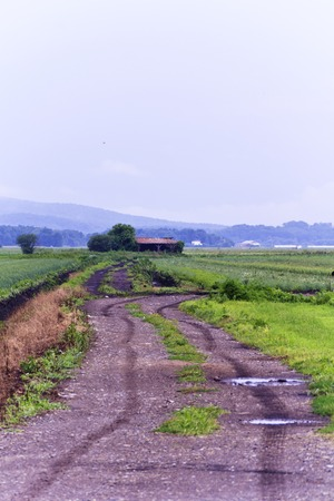 Humid summer day on a dirt path to a farm photo