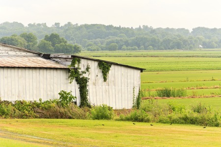 Overcast humid summer day on a farm with overgrown barn in foreground photo