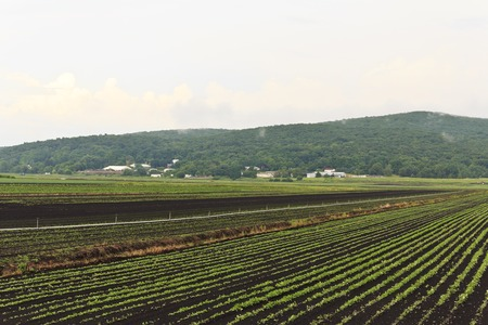 Summer farm crops landscape with mountains photo