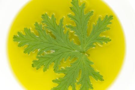 repellant: A citronella plant leaf resting in oil to make homemade mosquito repellant