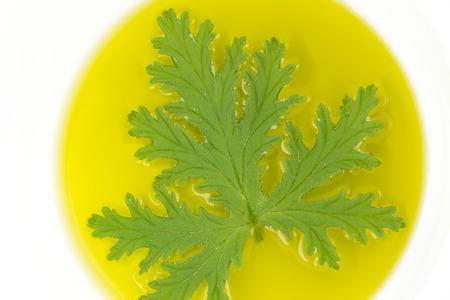 Tous Citronnelle Naturelle Moustique Répulsif Plante Laisse Sur