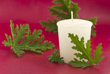 repellant: Citronella plant leaves with a citronella candle, no mosquitos