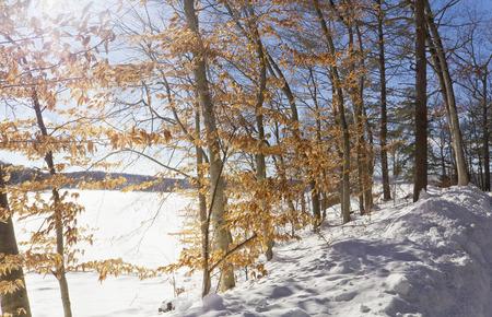 Bright sunny day illuminates the frozen lake and crisp fall leaves