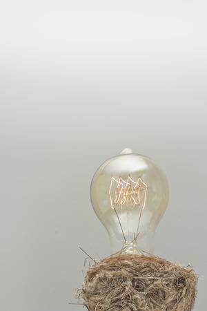 filament: Decorative antique edison style filament light bulb in birds nest
