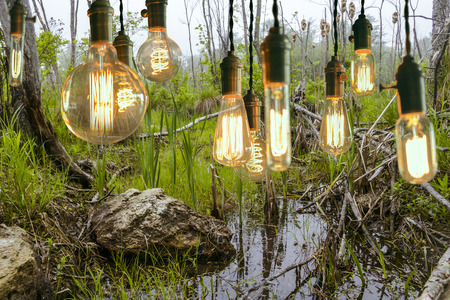 filament: Decorative antique edison style filament light bulbs hanging by swamp