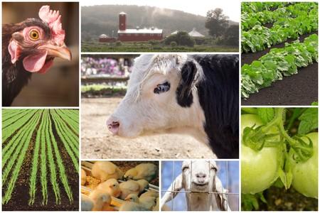 Mosaico de los animales de granja y las imágenes agrícola en las imágenes del collage