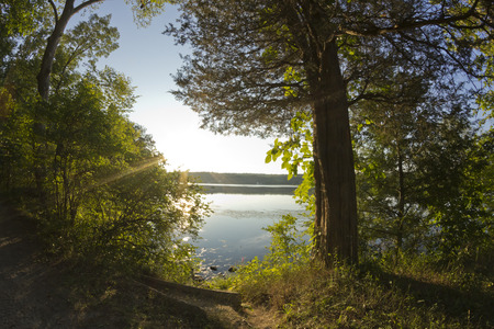 sunset tree: Down at the lake at the golden hour with summer tree leaves Stock Photo
