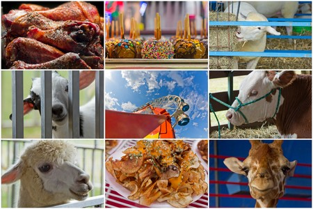 rides: Attractions at summer carnival including animals rides and food in collage