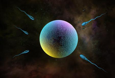 sex cell: Swimming sperm race to impregnate a fertile human egg