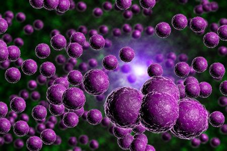 bacterias: Primer plano de las bacterias estafilococos púrpura imagen generada por ordenador en Foto de archivo