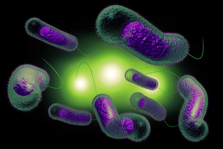 small intestine: Close up 3D illustration of microscopic Cholera bacteria infection Stock Photo