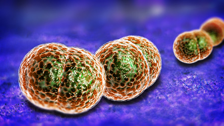 coccus: 3D microscope close up of meningitis bacteria, also known as meningococcus