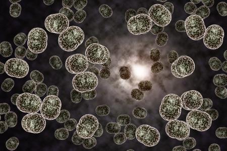 bacterias: Microscopio 3D de cerca de bacteria de la meningitis, también conocida como meningococo