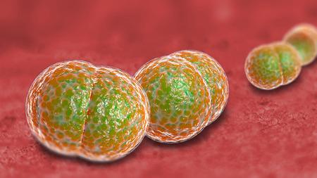 meningitis: 3D microscope close up of meningitis bacteria, also known as meningococcus