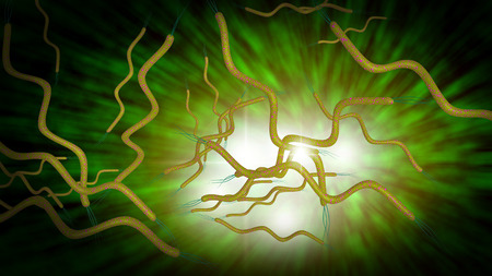 3D computer generated microscope close up of curly shaped Spirella bacteria