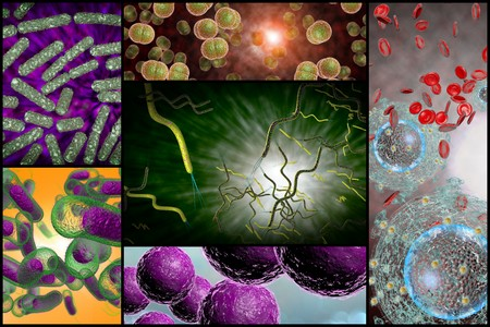 escherichia: 3D microscope close up of various bacteria in collage imagery