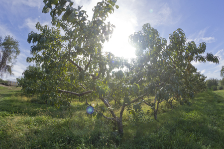 fisheye: Landscape summer orchard with bright sunlight using fisheye lens Stock Photo