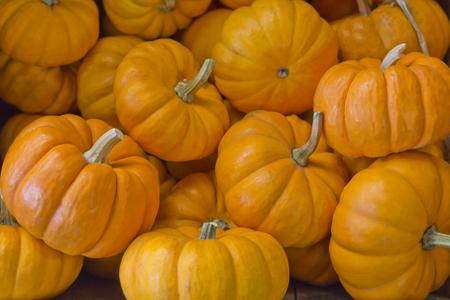 Pile of seasonal mini pumpkins at local farmers market