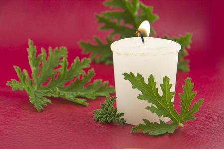 repellant: Citronella plant leaves with a citronella candle, no mosquitos Stock Photo