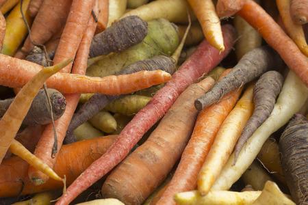 carots: Organic heirloom carrots in yellow red orange and purple