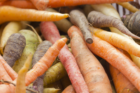 carrot: Organic heirloom carrots in yellow red orange and purple