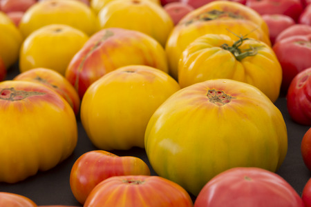 heirloom: Fresh yellow heirloom tomatoes on display at local farmers market Stock Photo