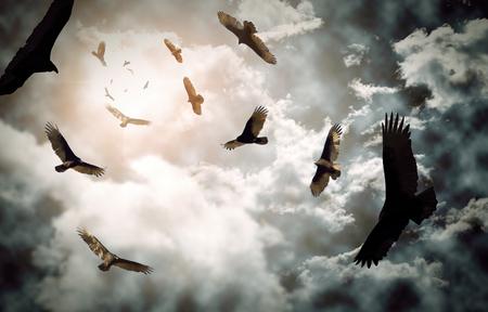 cuervo: Bandada de buitres de pavo con nubes amenazantes y sol brillante