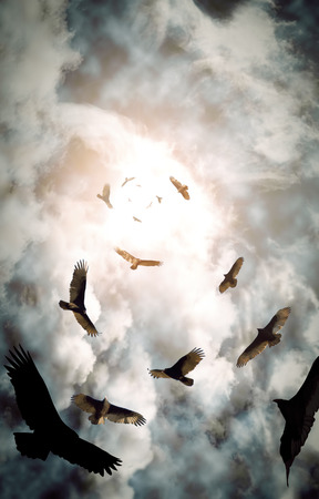aura sun: Flock of circling turkey vultures with looming clouds and bright sun