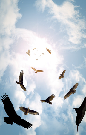 Flock of circling turkey vultures with looming clouds and bright sun