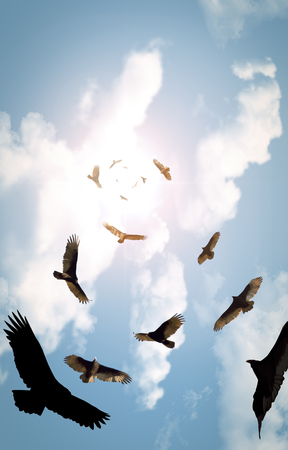 looming: Flock of circling turkey vultures with looming clouds and bright sun