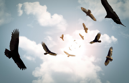 buzzard: Flock of circling turkey vultures with looming clouds and bright sun