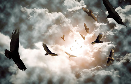 circling: Flock of circling turkey vultures with looming clouds and bright sun