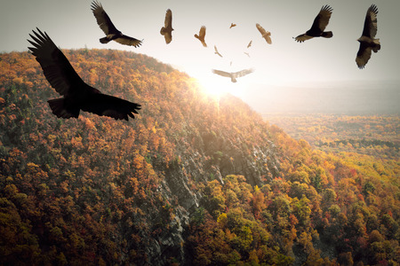 aura sun: Flock of circling turkey vultures hover above autumn mountains Stock Photo