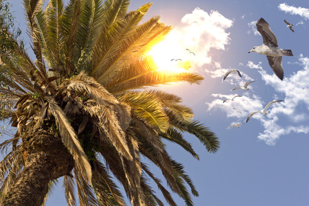 sea gull: Sea gull flying through the air through tropical palm trees