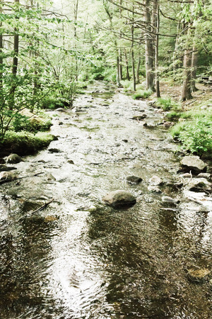 pine creek: Tranquil summer stream stretches through thick forest